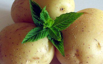 BIOX M, l'antigermogliante naturale per la conservazione delle patate